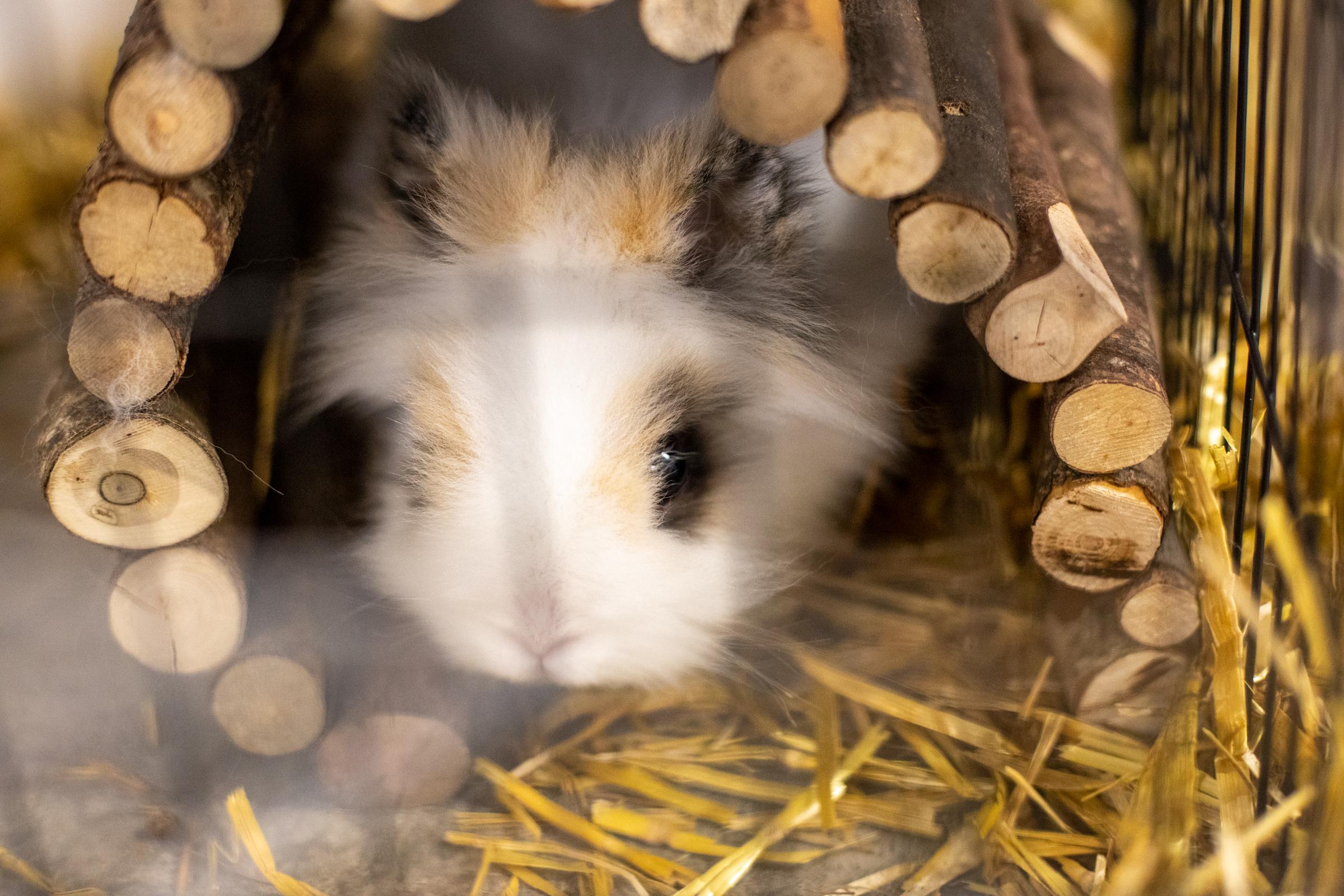 Un hamster pour compagnie à l'EMS de Lajoux